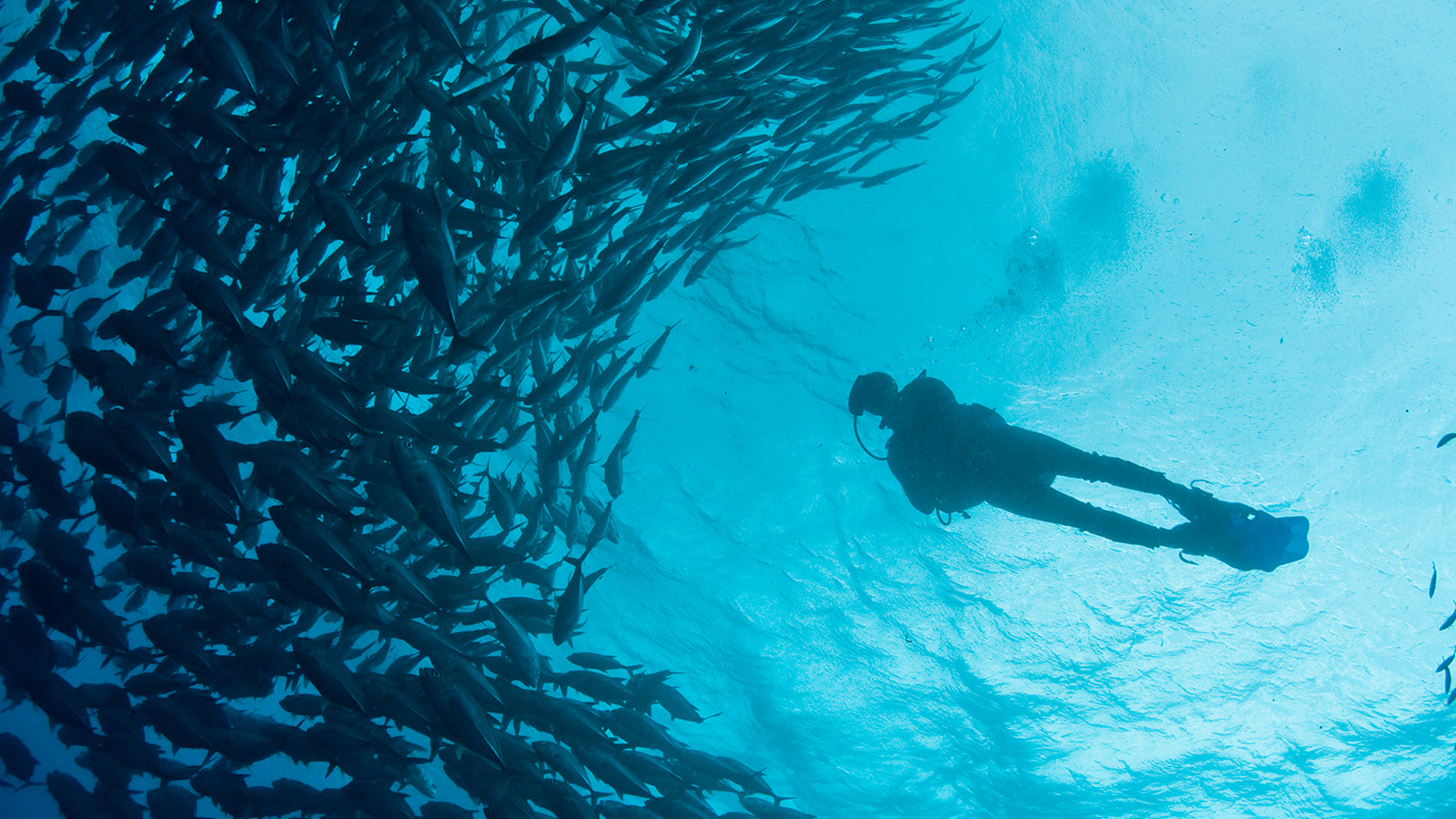 Palamós Dive Center estará presente en el Mediterranean Diving Show